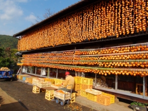 Look at all of these persimmons drying in Japan! I will have to research a bit and find out what they do with them all. Eating? Cooking? It's so pretty.