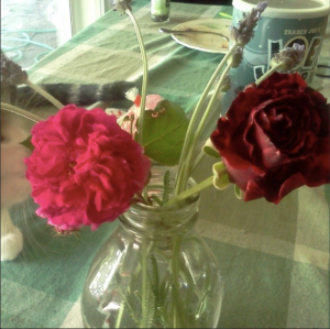This was the rose mystery. The one on the right is the rose that has been blooming in that spot for years. The one on the left is some kind of grandparent to it, but I wanted to know what, exactly.