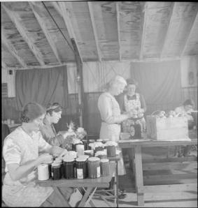 From Wikimedia Commons: Community Gardening- Wartime Food Production at Rowney Green, Worcestershire, England, UK, 1943 Members of the Women's Institute hard at work making jam in the Peace Hall (an army hut converted into a village hall) at Rowney Green, Worcestershire. Labelling the jam jars in the foreground are Mrs Lee (left) and Mrs Dodd. Weighing the fruit in the centre of the photograph is Mrs Nutting. Another WI member can be seen behind her, also hard at work. The fruit was provided by people in the village, from their own gardens, and the sugar came from the government. According to the original caption, this centre has made nearly a ton and three-quarters of jam in the three seasons since the scheme began.